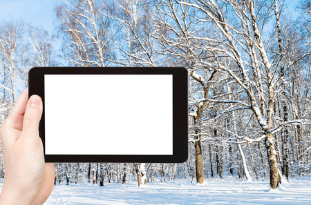 travel concept - tourist photographs of forest glade in city park in winter in Moscow city on smartphone with empty cutout screen with blank place for advertising