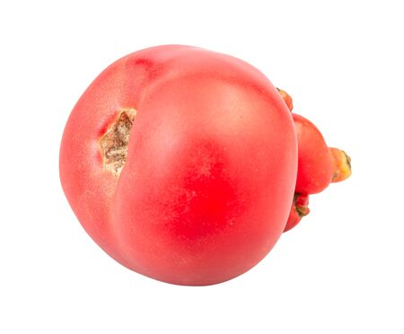 Natural pink tomato with sprouts isolated on white