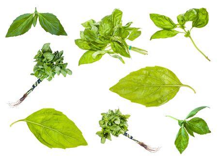 Set van verse groene basilicum kruiden geïsoleerd op wit