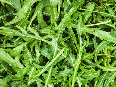 natural food background - many fresh green leaves of rocket herb close up Zdjęcie Seryjne