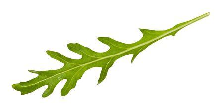 fresh green leaf of Arugula (rocket, eruca, rucola) plant isolated on white background Zdjęcie Seryjne