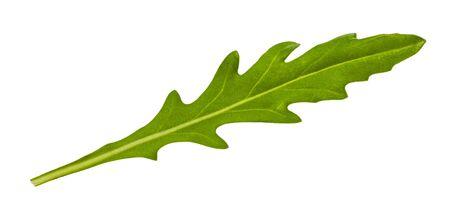 natural leaf of Arugula (rocket, eruca, rucola) herb isolated on white background