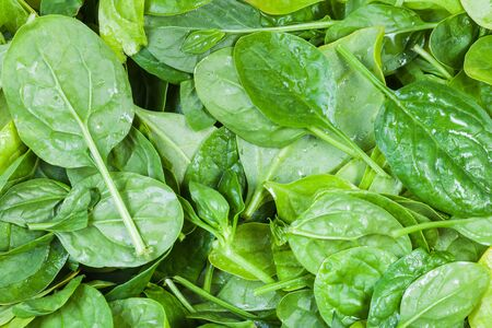natural food background - many fresh leaves of spinach herb close up Zdjęcie Seryjne