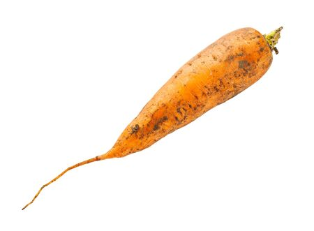 dirty organic garden carrot isolated on white background Stock Photo