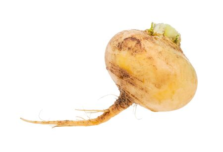 single taproot of fresh organic yellow turnip isolated on white background