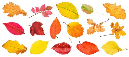 many various autumn leaves and twigs isolated on white background