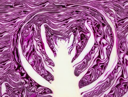 Cross-section of red cabbage cabbage head