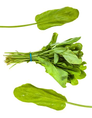Various leaves and bunch of sorrel herb isolated on white 版權商用圖片