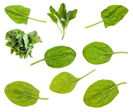 Various leaves and bunches of spinach plant isolated on white