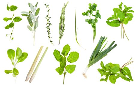 Various fresh twigs of edible greens isolated on white