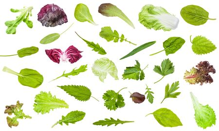 Various fresh leaves of edible greens isolated on white Stockfoto