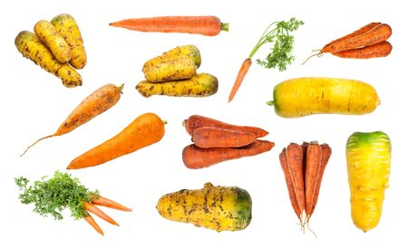 set of various ripe organic carrot taproots isolated on white background