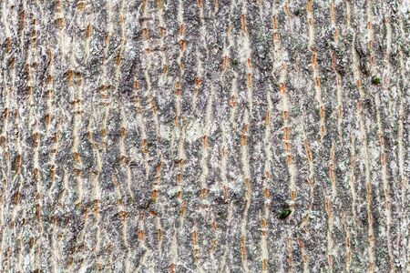 natural texture - furrowed bark on trunk of maple tree (acer platanoides) close up