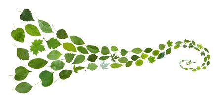 collage from many natural leaves - spiral pattern from green leaves isolated on white background