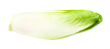 whole fresh Belgian endive (white Common chicory) isolated on white background Archivio Fotografico