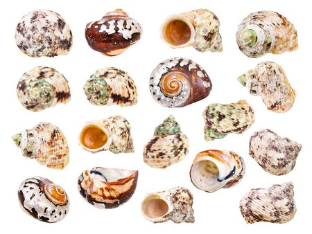 set of sea shell of molluscs isolated on white background