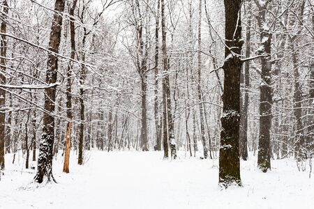 snow-covered footpath in snowy forest during snowfall in Timiryazevsky park in Moscow city on winter day