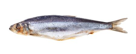 Frozen Atlantic herring isolated on white