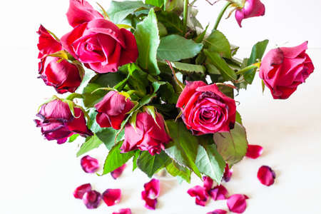 above view of bouquet of withered red rose flowers and fallen petals on pale brown table (focus on the bloom on foreground)