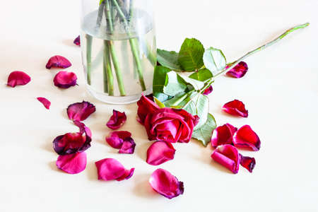 wilted red rose flower and many fallen petals near glass vase on pale brown table