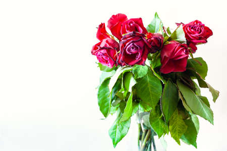side view of bouquet of wilted red rose flowers on pale brown background with copyspace Фото со стока