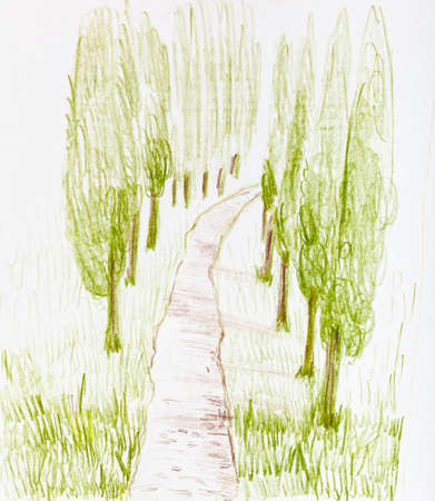 sketch of country road between poplar trees in summer hand-drawn by color pencils on white paper