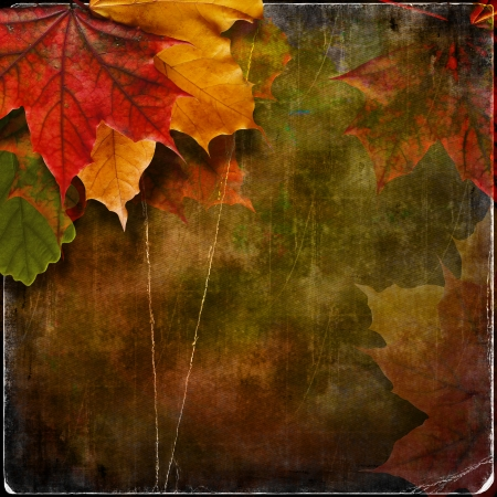 Grungy autumn background with maple leaves Stock Photo - 22643544