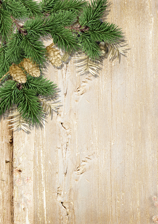 hristmas: hristmas background with fir branches, gold pinecones Stock Photo