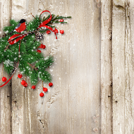 bullfinch: Christmas vintage wooden background with fir branches, bullfinch