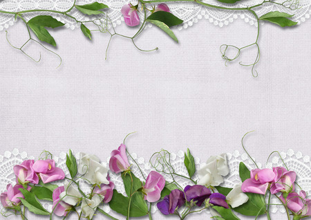 pink floral: Sweet peas flowers on prettyl background
