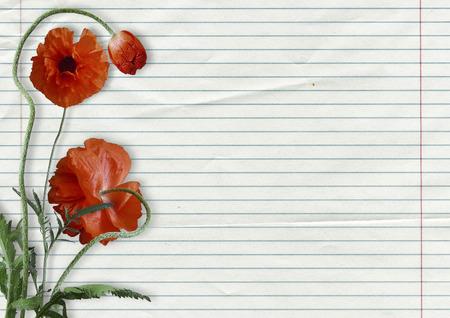 Beautiful poppy on school exercise book
