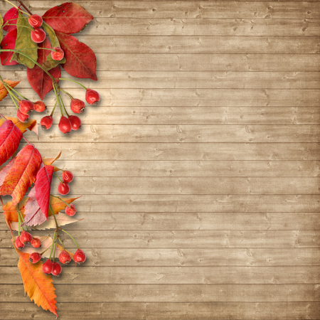 wood board: Vintage autumn background with rowan on wooden board Stock Photo