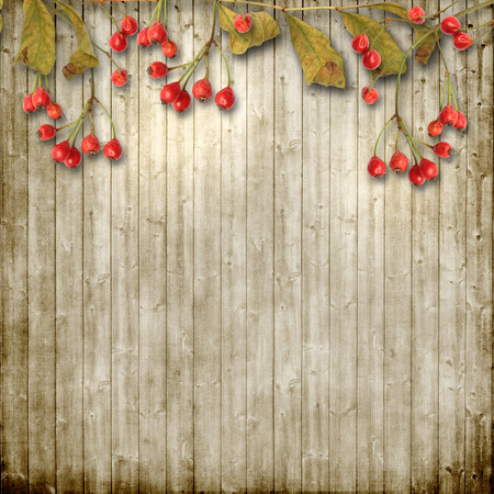 ashberry: Vintage wooden background with autumn ashberry