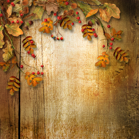 ashberry: Vintage autumn background with faded leaves and ashberry