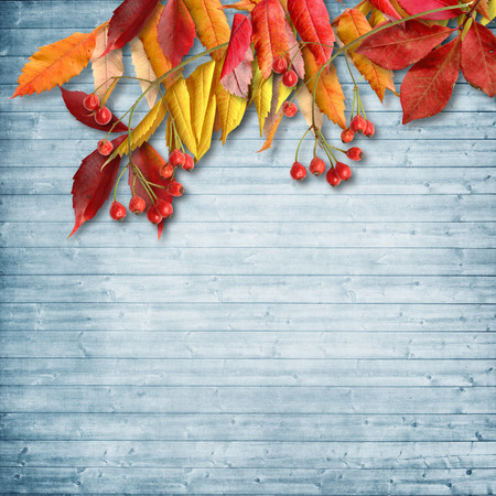 rowanberry: Vintage autumn background with rowan on wooden