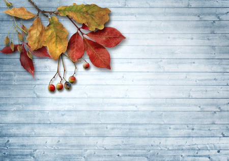 Autumn leaves and ashberry over wooden background with copy spac