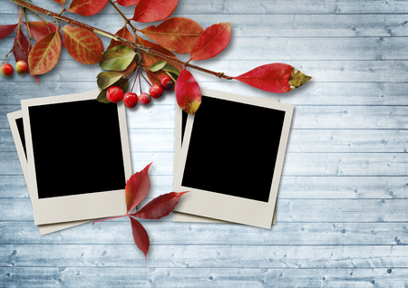 Autumn leaves and ashberry on wooden background with frame