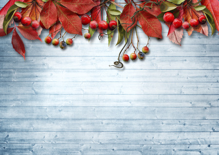 wood board: Autumn vintage background with fine leaves and berry