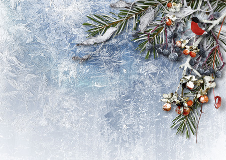snowy: Winter background with snowy berries and bullfinch