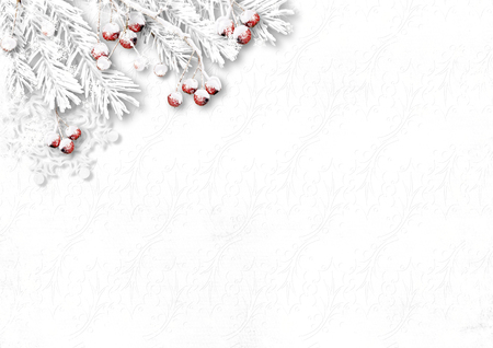winter background: White winter background with snowy branches and berries