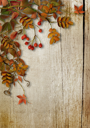 Vintage autumn background with leaves and rowan on wooden boards
