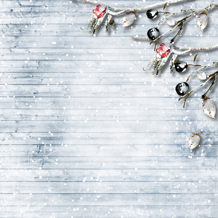 hoarfrost: Winter background with frost branches and berries. with copy-space Stock Photo