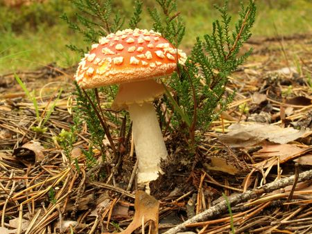 mushroom photo