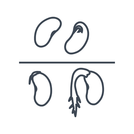 thin line icon haricot beans, grains Illustration