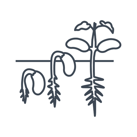 thin line icon germination, sprouting  haricot beans Illustration