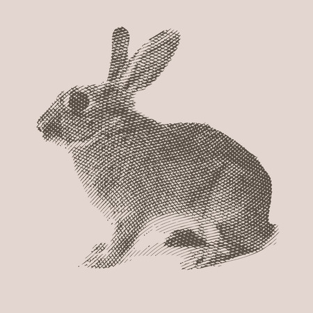 Rabbit. Farm animal. Vintage engraved illustration on clean background. Çizim