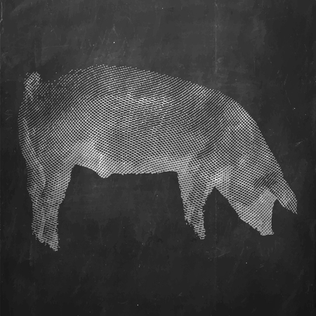 Pig. Farm animal. Vintage engraved illustration on clean background. Çizim