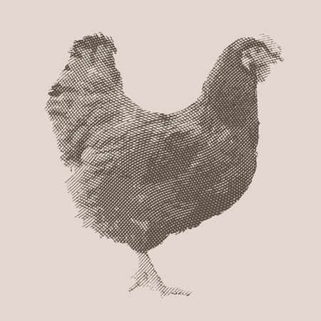 Chicken. Farm animal. Vintage engraved illustration on clean background. Çizim