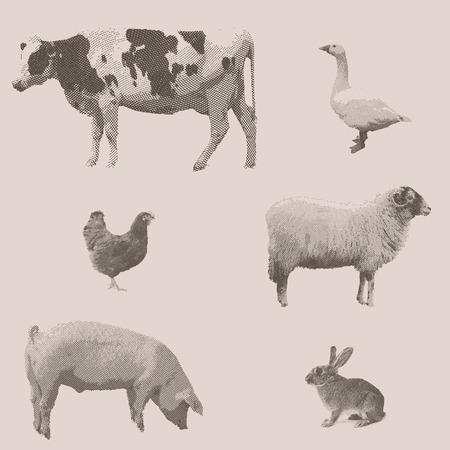 Farm animals. Vintage engraved illustration on clean background. Cow, rabbit, pig, goose, chicken, sheep.