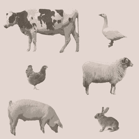french countryside: Farm animals. Vintage engraved illustration on clean background. Cow, rabbit, pig, goose, chicken, sheep.